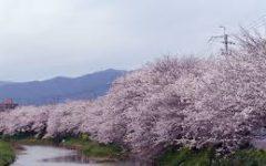 花曇 四月の銘